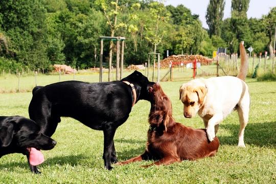 Körpersprache Des Hundes Arbeitsblatt : Tierpsychologische hundeschule marschall in mandel die